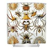 Arachnida Shower Curtain by Nomad Art And  Design