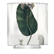 Asclepias Syriaca From Phytographie Shower Curtain by L.F.J. Hoquart