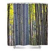 Aspen Trunks Shower Curtain by Inge Johnsson