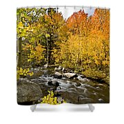 Aspens At Bishop Creek Shower Curtain by Cat Connor