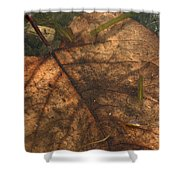 Atres 11 Shower Curtain by Karol Livote