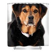 Attentive Labrador Dog Shower Curtain by Christina Rollo