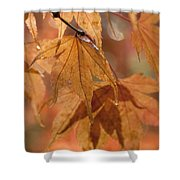Autumn Acer Shower Curtain by Anne Gilbert