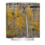 Autumn Aspens Shower Curtain by James BO  Insogna