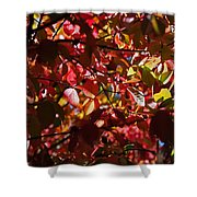 Autumn Breeze Shower Curtain by Rona Black