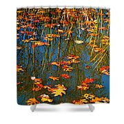 Autumn  Floating Shower Curtain by Peggy  Franz