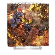 Autumn In The Vineyard Shower Curtain by Michele Steffey