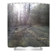 Autumn Morning 5 Shower Curtain by David Stribbling