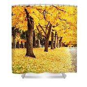 Autumn Perspective Shower Curtain by Carol Groenen