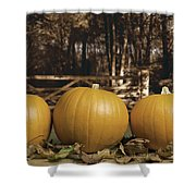Autumn Pumpkins Shower Curtain by Amanda And Christopher Elwell