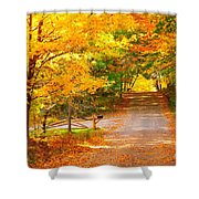 Autumn Road Home Shower Curtain by Terri Gostola