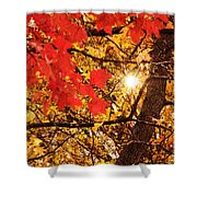 Autumn Sunrise Painterly Shower Curtain by Andee Design