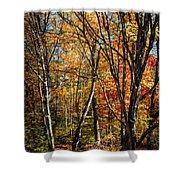 Autumn Trees Shower Curtain by Elena Elisseeva