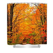 Autumn Tunnel Of Trees Shower Curtain by Terri Gostola