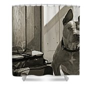 Avery Shower Curtain by Cindi Ressler
