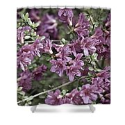 Azalea Shower Curtain by Frank Tschakert