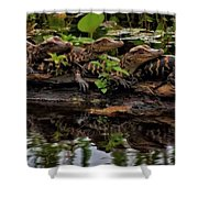 Baby Alligators Reflection Shower Curtain by Dan Sproul