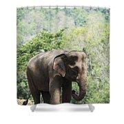 Baby Elephant Chiang Mai, Thailand Shower Curtain by Stuart Corlett