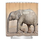 Baby Elephant  Shower Curtain by Johan Swanepoel