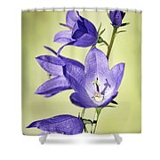 Balloon Flowers Shower Curtain by Tony Cordoza