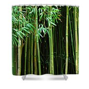 Bamboo Forest Maui Shower Curtain by Bob Christopher