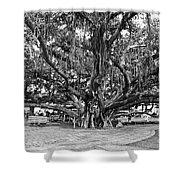 Banyan Tree Shower Curtain by Scott Pellegrin