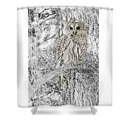 Barred Owl Snowy Day In The Forest Shower Curtain by Jennie Marie Schell