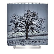 Barren Winter Scene With Tree Shower Curtain by Dan Friend