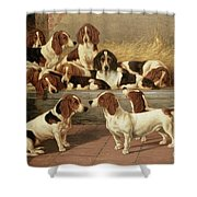Basset Hounds in a Kennel Shower Curtain by VT Garland
