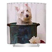 Bath Time Westie Shower Curtain by Edward Fielding