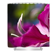 Bauhinia Purpurea - Hawaiian Orchid Tree Shower Curtain by Sharon Mau