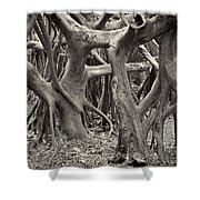 Baynan Roots Shower Curtain by Rudy Umans