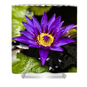 Bayou Beauty Shower Curtain by Scott Pellegrin