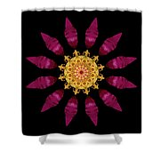 Beach Rose Iv Flower Mandala Shower Curtain by David J Bookbinder