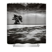 Beach Tree Shower Curtain by Dave Bowman