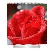 Beautiful as a Rose Shower Curtain by Cheryl Young