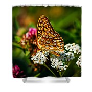 Beautiful Butterfly Shower Curtain by Robert Bales