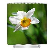 Beautiful Daffodil Shower Curtain by Jenny Rainbow