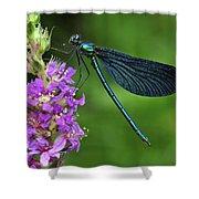 Beautiful Demoiselle Male Switzerland Shower Curtain by Thomas Marent