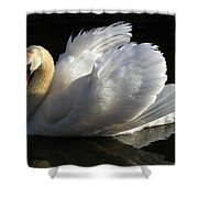 Beautiful Display Shower Curtain by Donna Kennedy