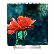 Beautiful Red Rose Shower Curtain by Robert Bales