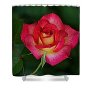 Beautiful Rose Shower Curtain by Sandy Keeton