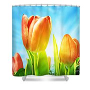 Beautiful Spring Tulips Background Shower Curtain by Michal Bednarek