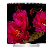 Beaver Tail Trio Shower Curtain by Robert Bales