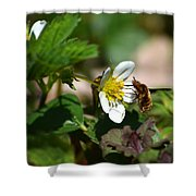 Bee Fly On White Flowers Shower Curtain by Christina Rollo