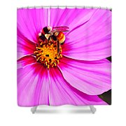 Bee On Pink Shower Curtain by Bill Caldwell -        ABeautifulSky Photography