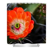 Bee Ware The Thorns Shower Curtain by Deb Halloran