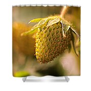 Being Young And Green Shower Curtain by Rona Black