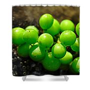Berries On Water Shower Curtain by Kaye Menner