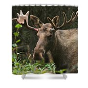 Big Guy Shower Curtain by Rick  Monyahan